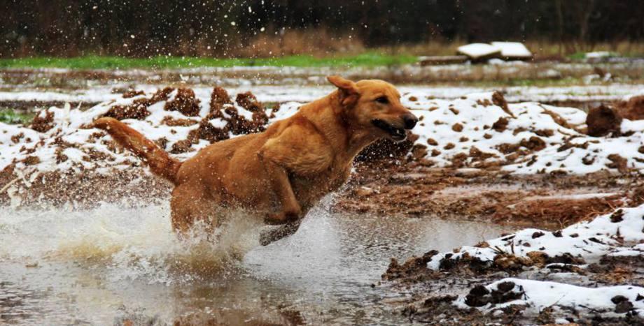 East Texas Retriever Gun Dog Training Texas Retriever Training